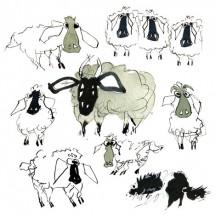 1 Sheep 08