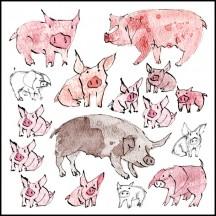 *214 Pigs